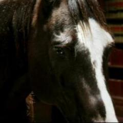 Bad_Horse